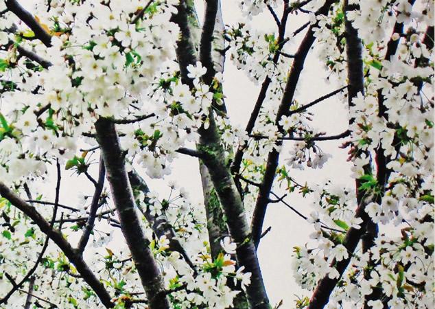 2012 Koestler awards: Blossom, Reaside Clinic