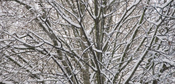 'Snowy branches': Pic: Chris Eason from Flickr
